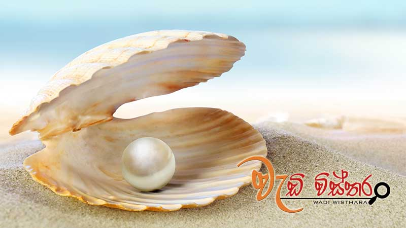 nara-decides-to-reinitiate-pearl-culture