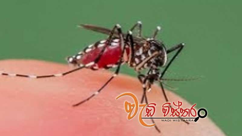 risk-spreading-dengue-continues-eradication-program