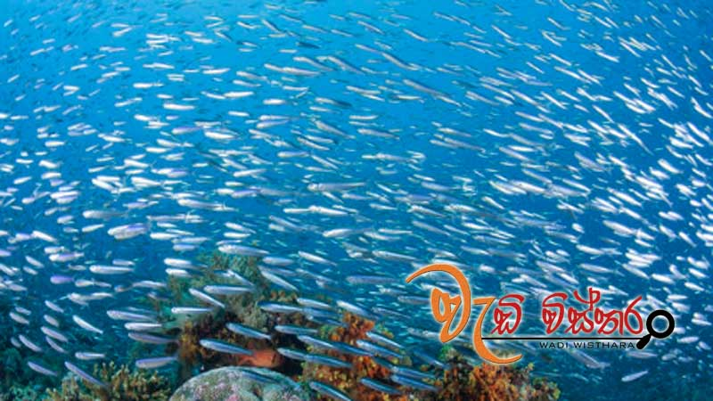sri-lanka-to-produce-150-mn-fish-fingerlings-by-2020