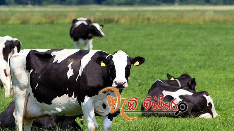 animal-husbandry-projects-for-plantation-sector