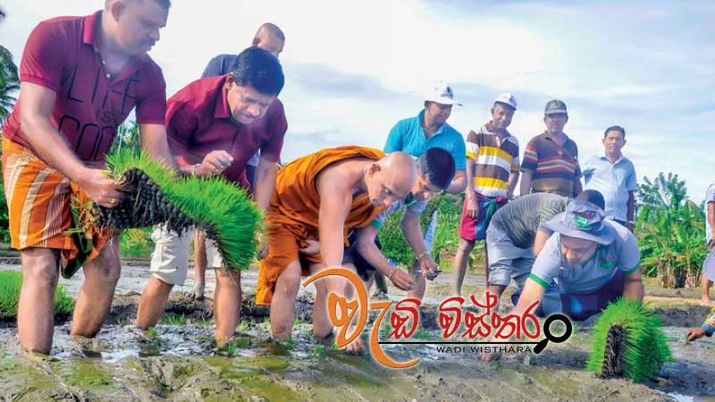 toxin-free-paddy-farming-for-2018-yala-season