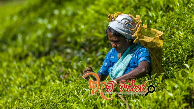 april-2018-tea-exports-up-on-last-year