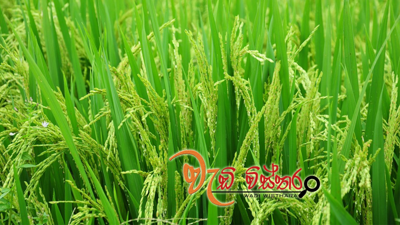 high-quality-rice-at-affordable-prices