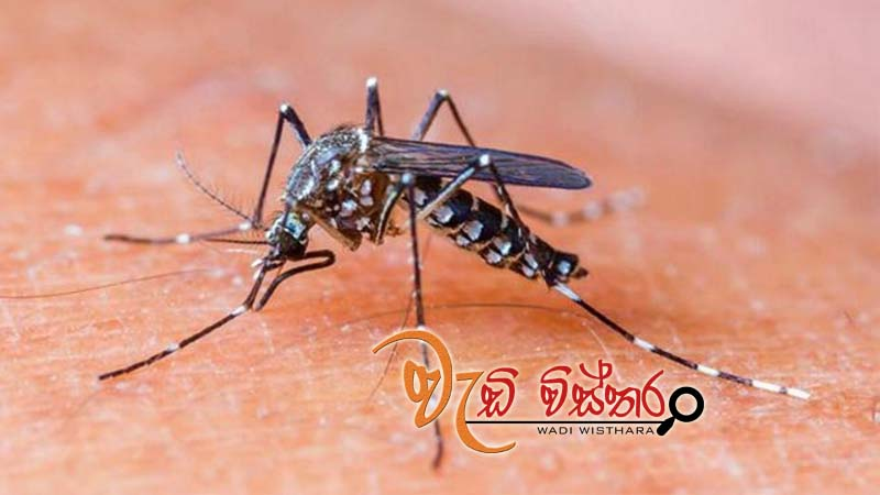 special-dengue-eradication-campaign-in-8-districts-today-tomorrow