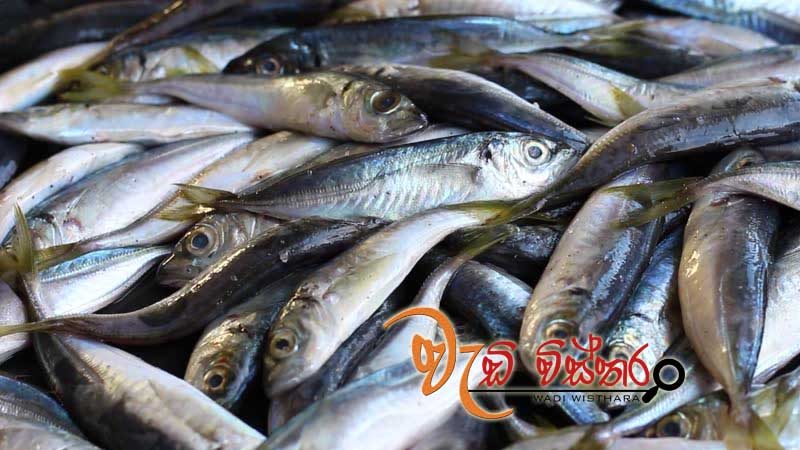 fish-exports-to-europe-increase-by-125-percent