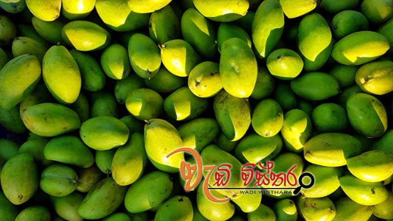rapid-agriculture-development-mangoes-to-lead-project