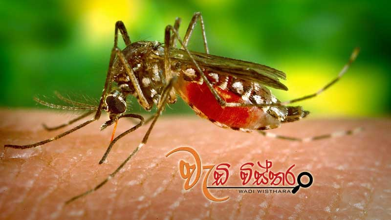 national-mosquito-control-week-starts-today