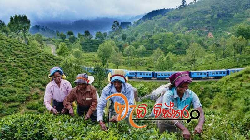 tea-prices-continue-upward-trend