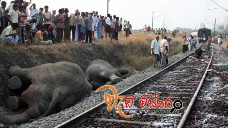 committee-to-prevent-elephant-deaths-by-trains